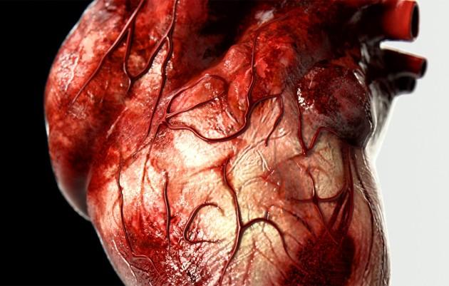 Human-Heart-Organ-Faust-heart-symbolises